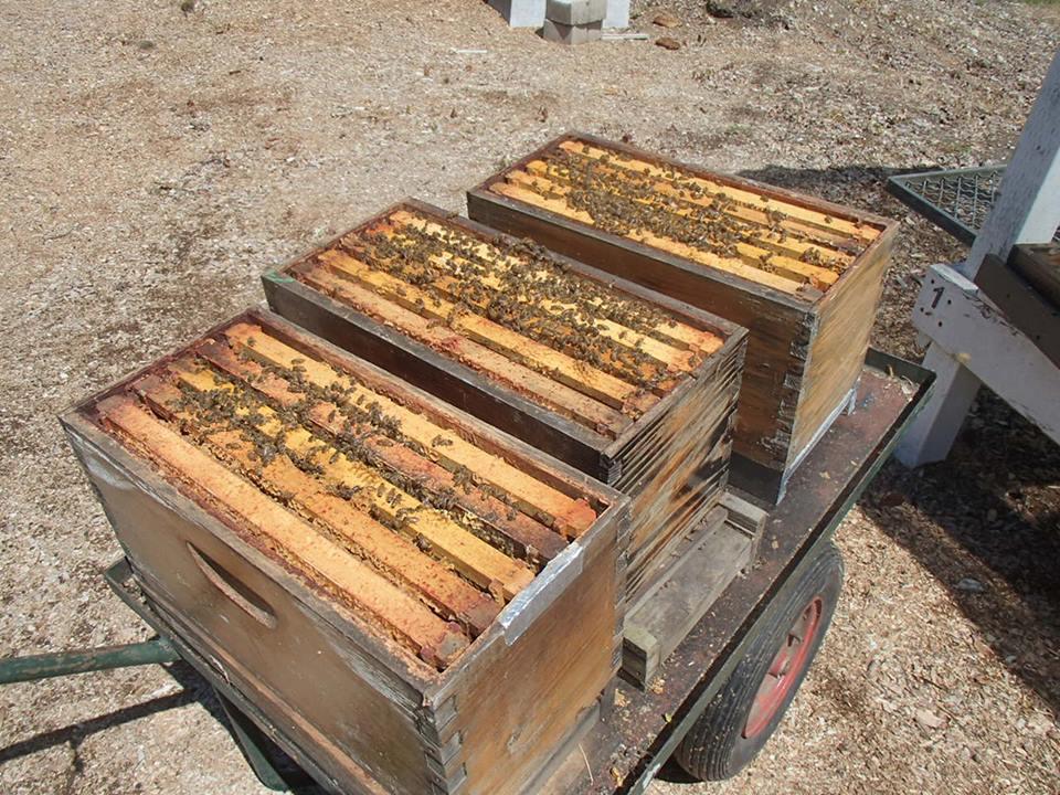 satılık arı 3