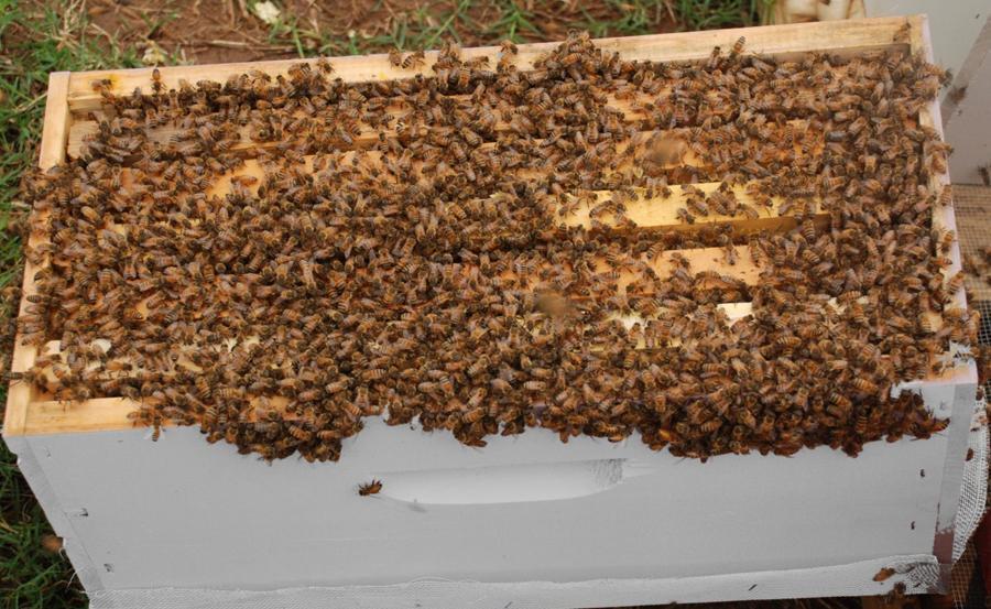 satılık arı kovan