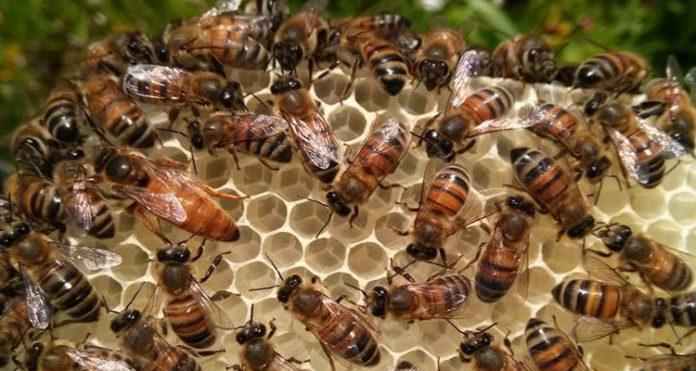 ana arı gen tr şikayet 1