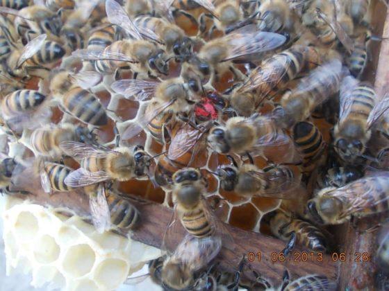 belfast ana arı 2