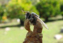 ana arı yumurtlamayı etkileyen etkenler