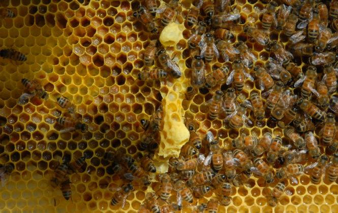 belfast ana arı 26