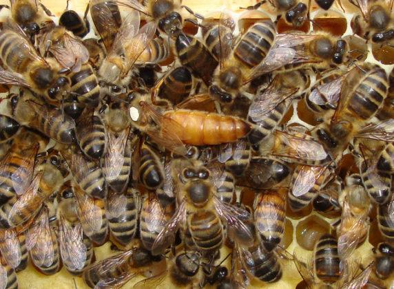 belfast ana arı 5