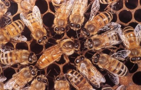belfast ana arı 8