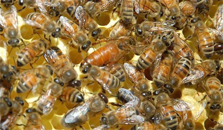 belfast ana arı 9