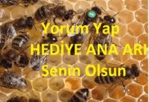 hediye ana arı