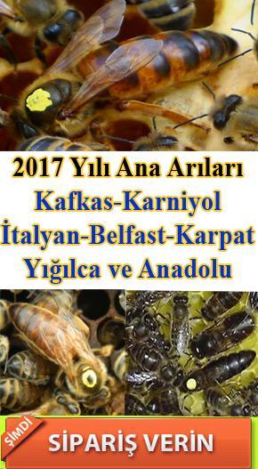 2017-yili-ana-ari-siparisi