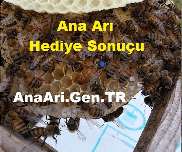 ana arı hediye sonuçu
