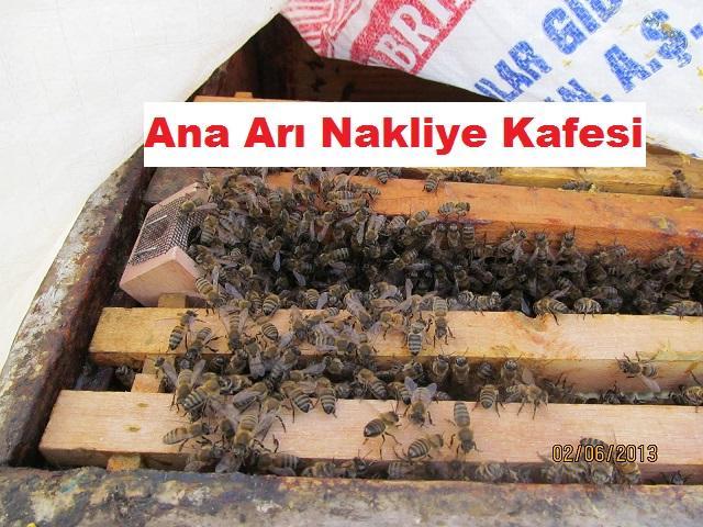 Ana Arı Nakliye Kafesi