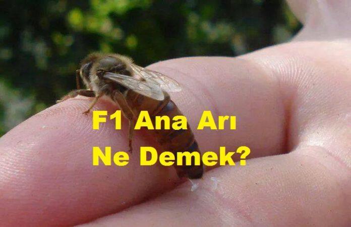 F1 Ana Arı Ne Demek