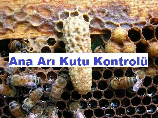 Ana Arı Kutu Kontrolü