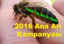 2016 ana arı kampanyası