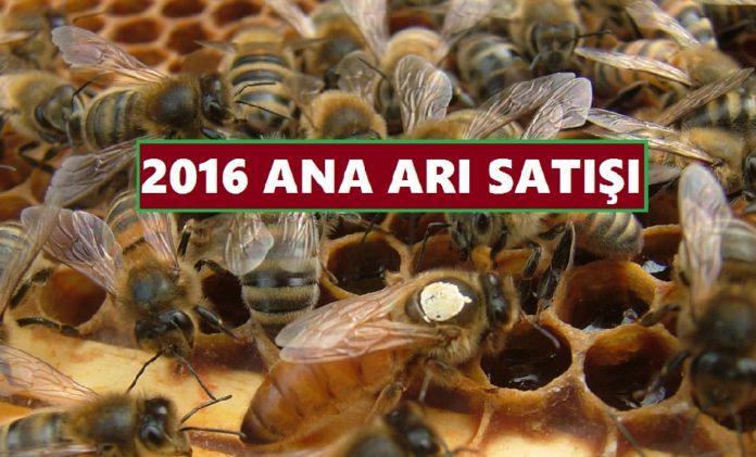 2016 ana arı satışı