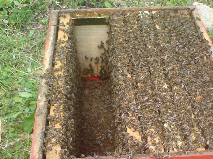 satılık arı 5