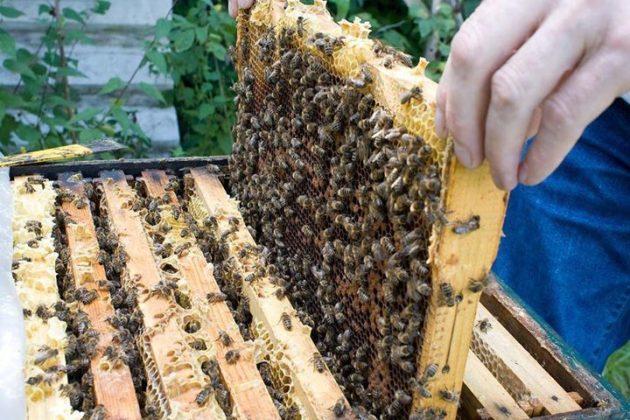 satılık arı 6