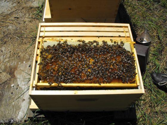 arı fiyatları 1