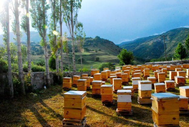 arı fiyatları 2