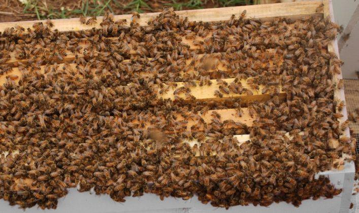 arı fiyatları 3