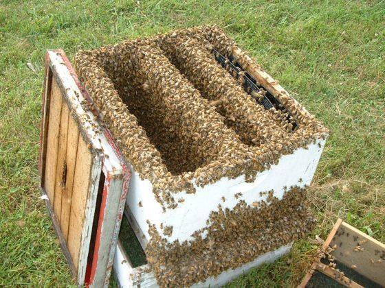arı fiyatları 4