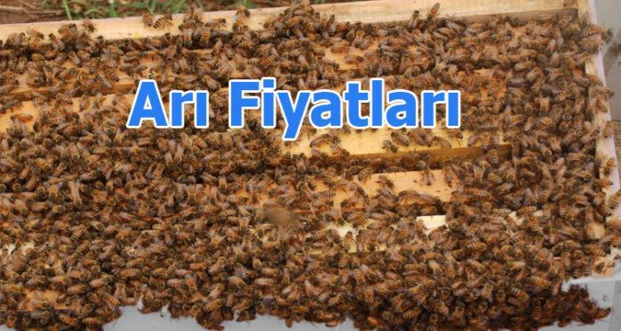 arı fiyatları