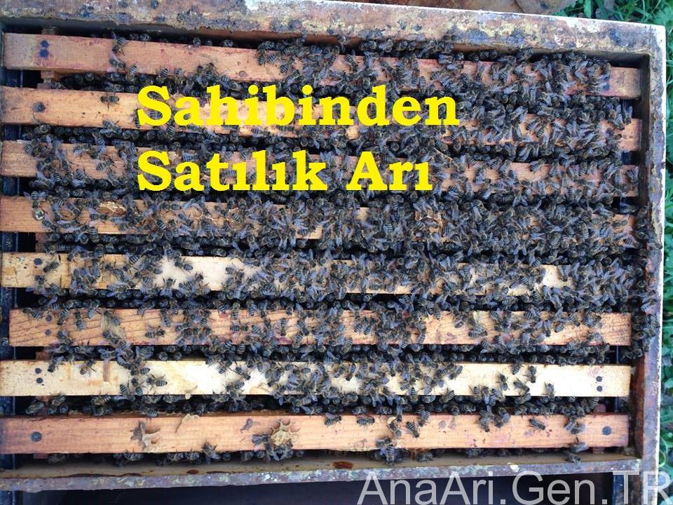sahibinden satılık arı