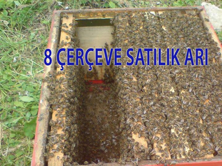 8 çerçeve satılık arı