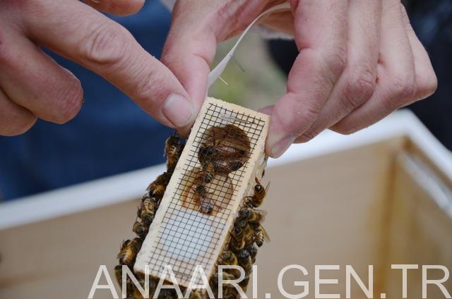 ana arı verme yöntemleri