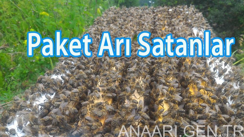 paket-arı-satanlar