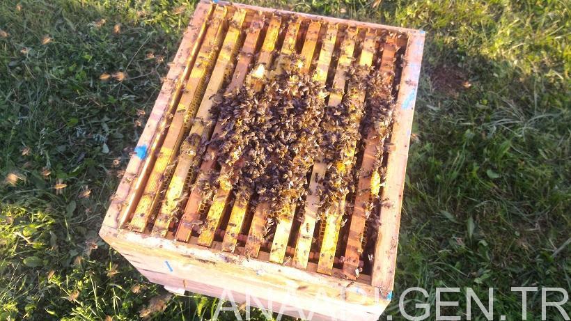 Arı Satışı