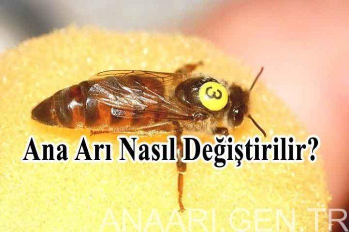 ana arı nasıl değiştirilir
