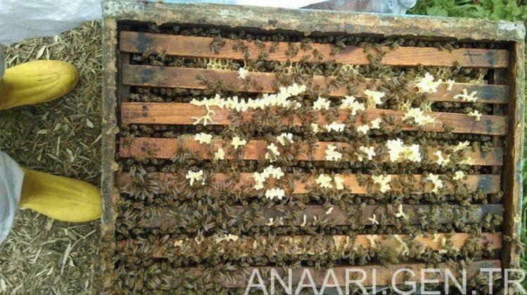 2018 yılı arı satışı 8