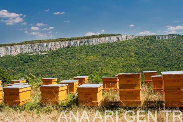 arı satışı sahibinden 2
