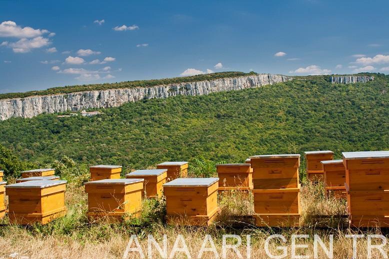 Arı Satışı Sahibinden