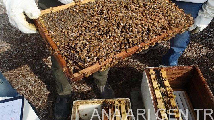 arı satışı sahibinden 3