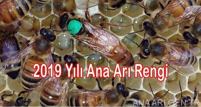 2019-yili-ana-ari-rengi