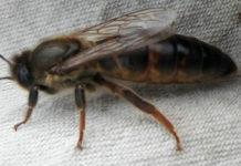 2019 yılı ana arı kampanyası 1