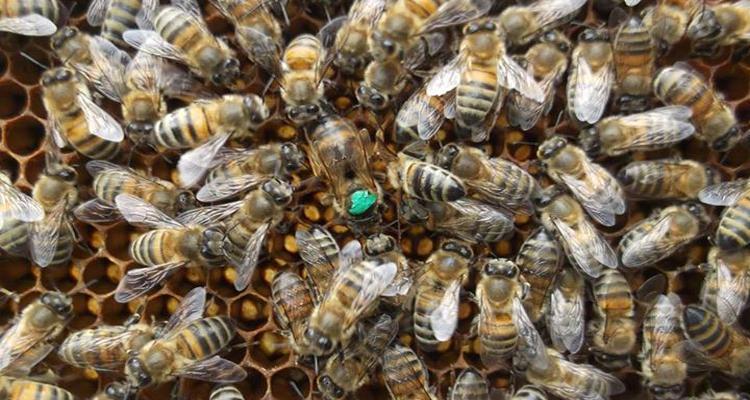 2019 yılı ana arı kampanyası 3