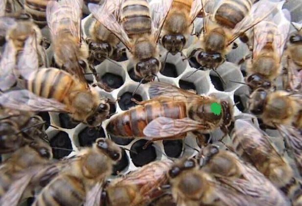 2019 Yılı Ana Arı Kampanyası