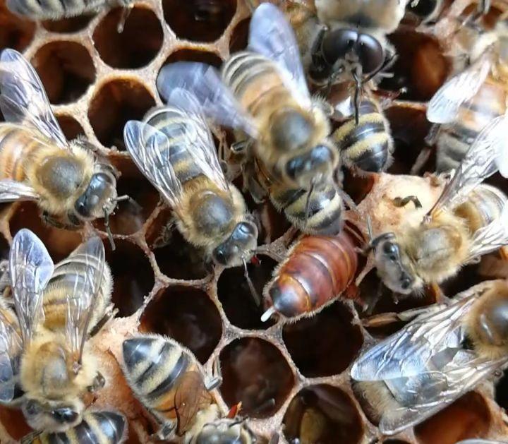 2019 yılı arı satışı 1