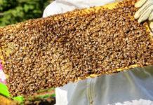 2019 yılı arı fiyatları