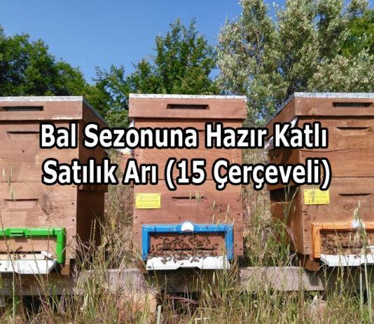 Bal Sezonuna Hazır Katlı Satılık Arı (15 Çerçeveli)