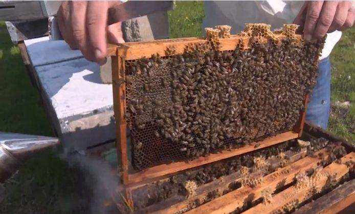 efe ana arısı 3