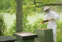 arı bölme ve arı birleştirme