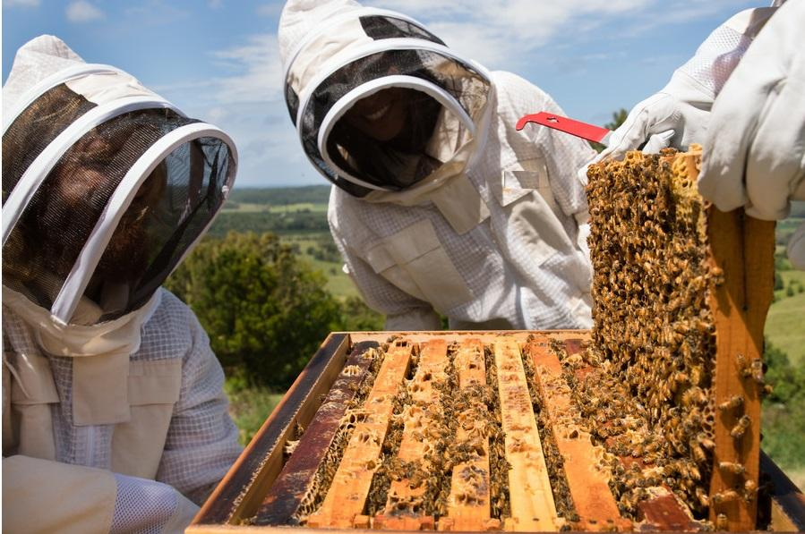 arı bölme ve birleştirme 1