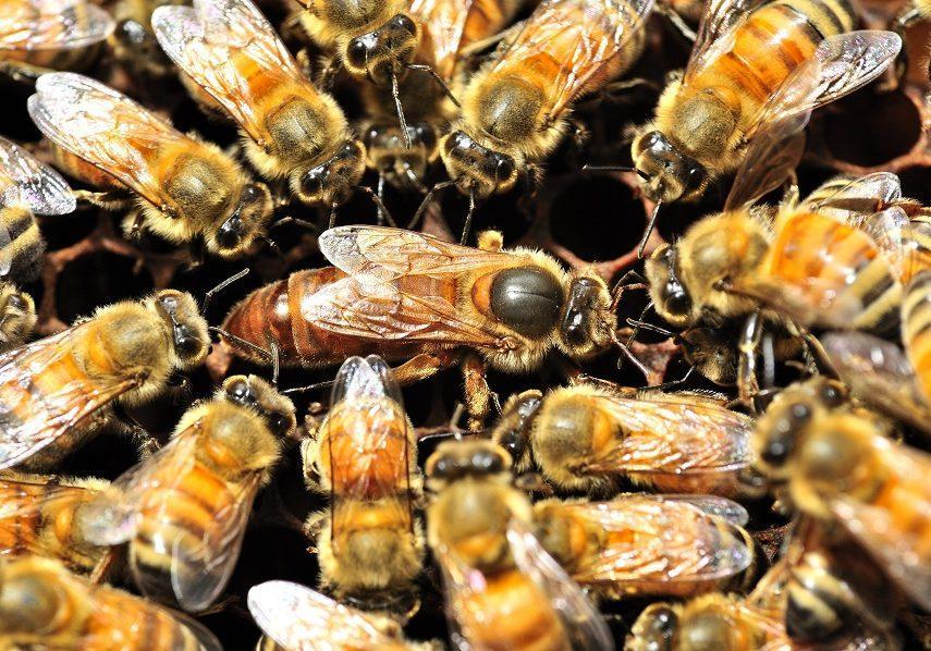 arı bölme ve birleştirme 2