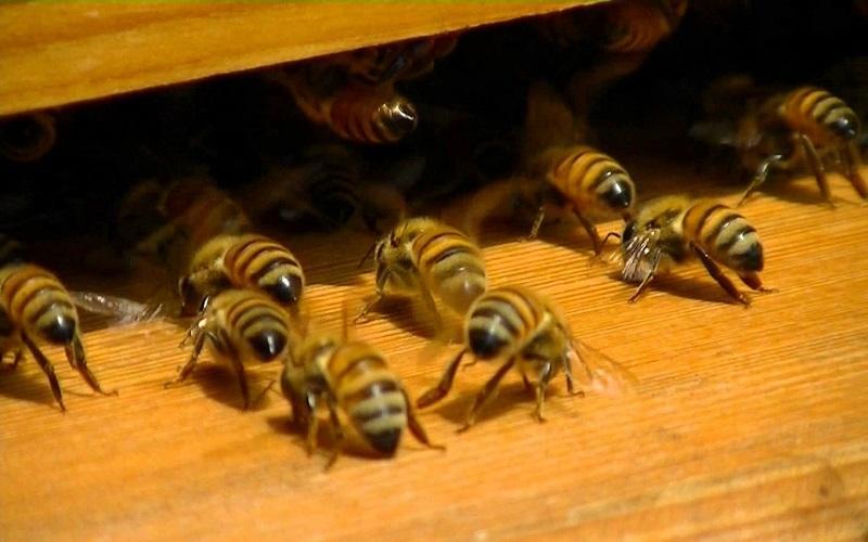 Ana Arı Olmazsa Ne Olur 2