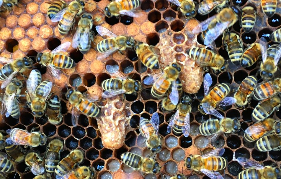 Ana Arı Olmazsa Ne Olur 3