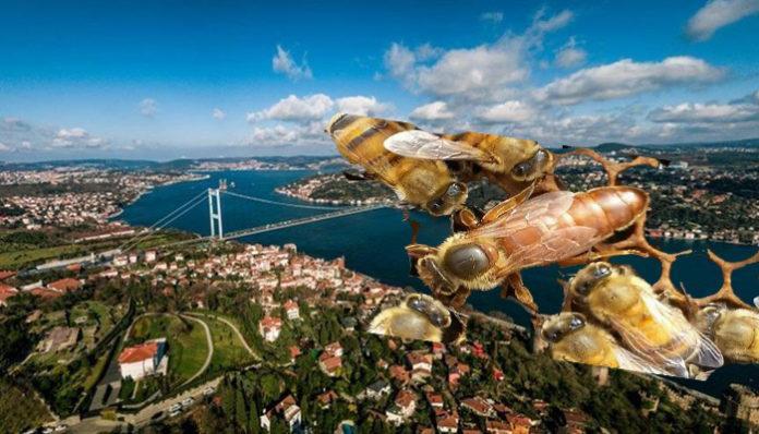 satılık arı istanbul
