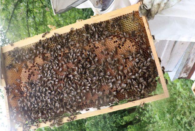 2020 yılı paket arı fiyatları 1