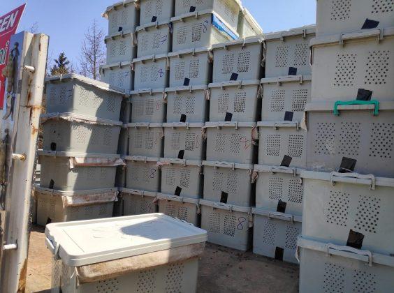 2020 yılı paket arı fiyatları 11